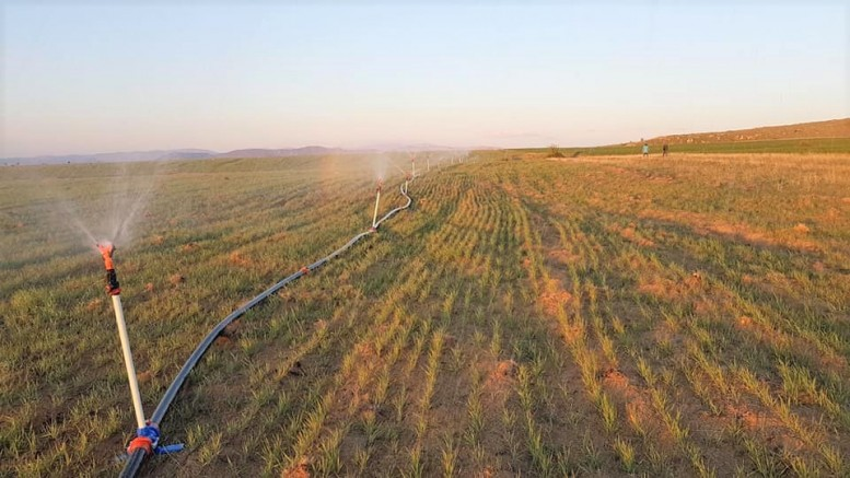 30 yıldır ekilmeyen araziler suyla buluştu