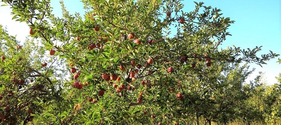 Elma Bahçesi Öğrencilere Burs Kaynağı Oldu