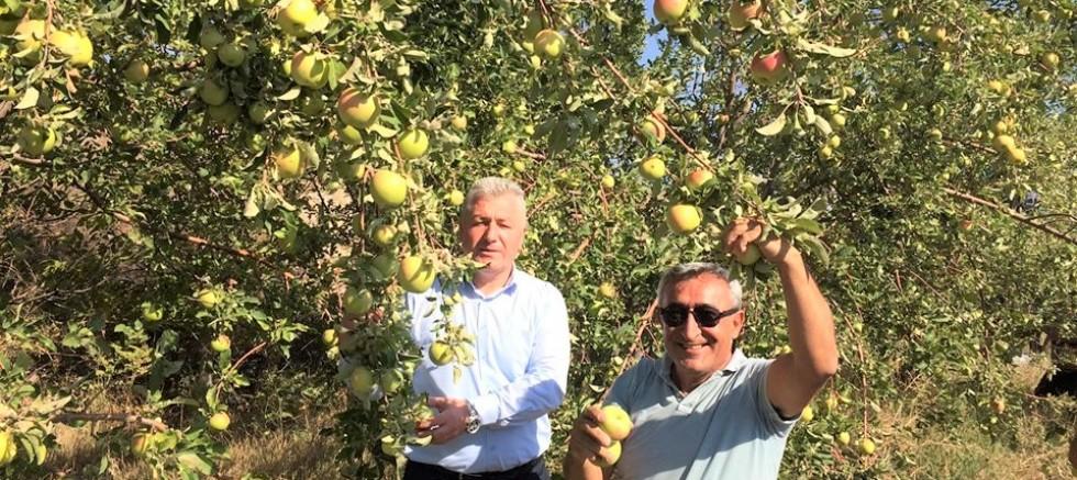 Toplanan elmalar 20 öğrenciye burs olacak