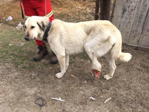 Yaralı Köpek İçin 2 Bin 200 Kilometre